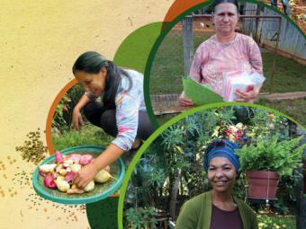 Cartilha Sementes da agroecologia – Sementes da Vida